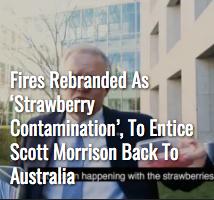 Screenshot_2019-12-22 The Shovel - Australia's satire news website.png
